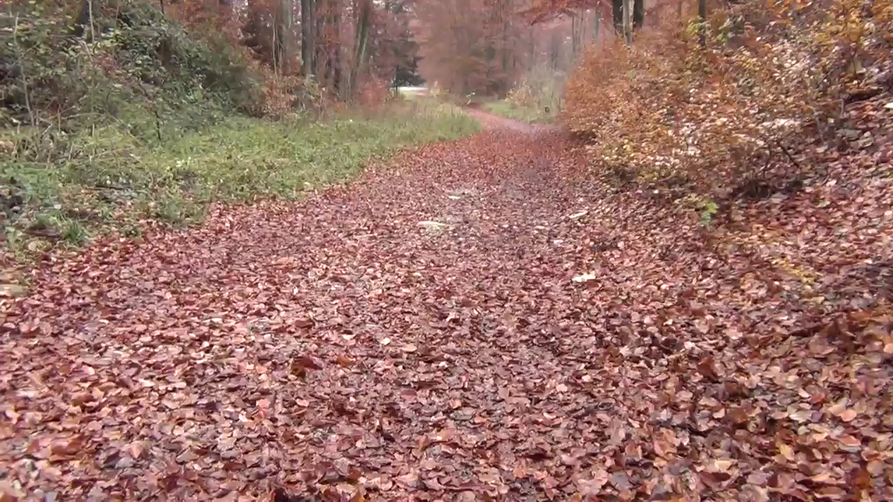 """""""Who CARES Wins"""", Roman Path, Sand, Swamp, Amish, Anabaptists & Swiss Backstabbers 16-11-2012"""