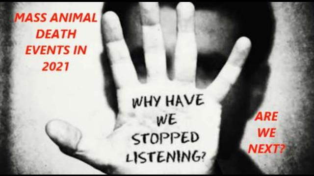 Why did we stop listening? Animals are telling us something. Are we next in line for mass death? 23-7-2021