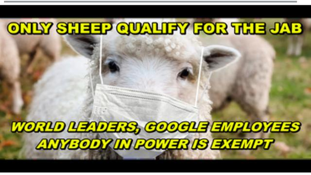 NO VAXX FOR GOOGLE EMPLOYEES, POLITICIAN OR ANY WORLD LEADER – ONLY SHEEP QUALIFY FOR THE JAB 11-9-2021